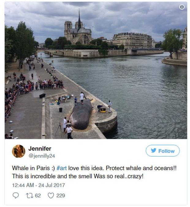 Cá voi khổng lồ phơi nắng giữa lòng Paris khiến người dân và du khách vô cùng kinh ngạc - Ảnh 3.