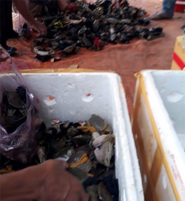 hải sản, cua biển, thực phẩm bẩn