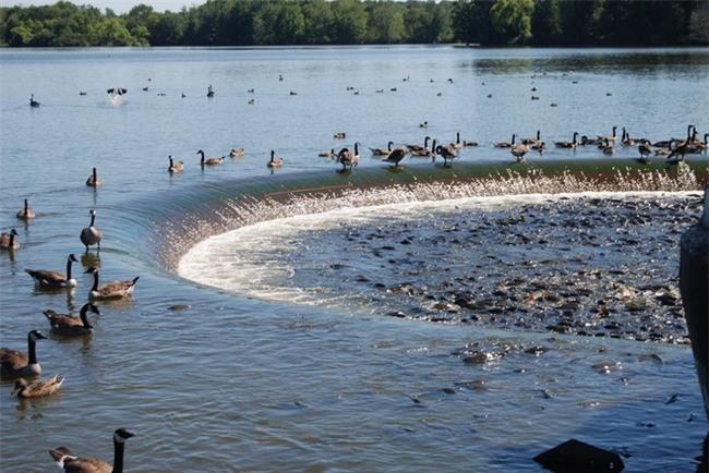 Không thể tin nổi có một hồ nước nhiều cá đến nỗi cá không có chỗ để quẫy đuôi - Ảnh 1.