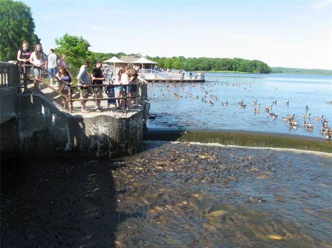 Không thể tin nổi có một hồ nước nhiều cá đến nỗi cá không có chỗ để quẫy đuôi - Ảnh 2.