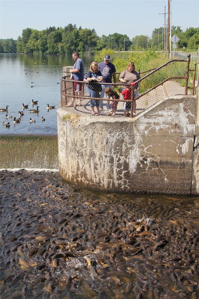 Không thể tin nổi có một hồ nước nhiều cá đến nỗi cá không có chỗ để quẫy đuôi - Ảnh 3.
