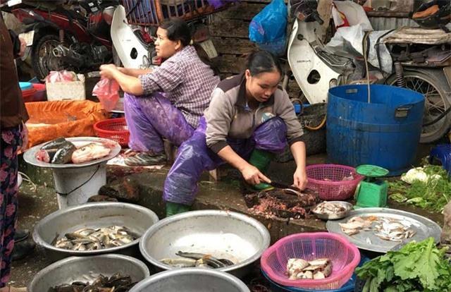 Người dân săn lùng mua các loại bong bóng cá
