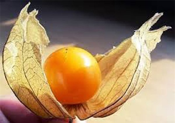 quả dại, hoa quả nhập khẩu