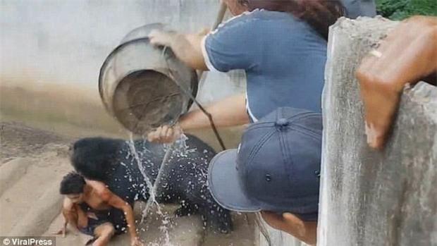 Thái Lan: Du khách sống sót đầy kỳ tích sau khi bị một con gấu lôi vào trong chuồng - Ảnh 1.