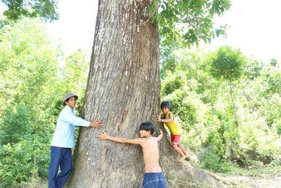cây cổ thụ, gỗ quý
