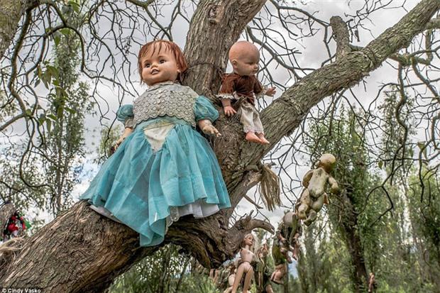 Cơn ác mộng Isla de las Munecas: Hòn đảo với hàng nghìn con búp bê kinh dị được treo lủng lẳng trên cây - Ảnh 10.