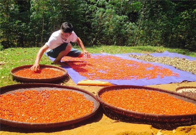 tỷ phú nông dân, làm giàu