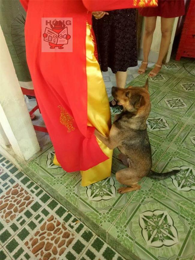 Hành động của chú chó trong ngày cưới cô chủ khiến bao người xúc động - Ảnh 3.
