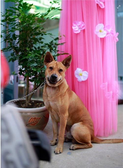 Hành động của chú chó trong ngày cưới cô chủ khiến bao người xúc động - Ảnh 6.