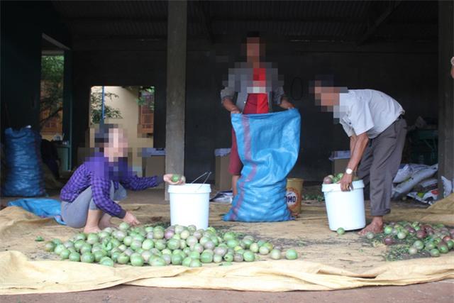 thương lái Trung Quốc, nông dân, nông sản, chanh leo, chanh dây, thương lái