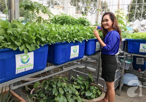 tỷ phú nông dân, về quê, nông dân, rau sạch, trồng rau, nuôi gà, trồng rau sạch