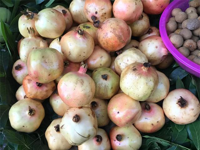 Hoa quả nhập khẩu, hoa quả Trung Quốc, hoa quả ngoại, nho Trung Quốc