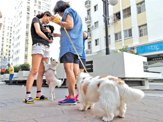 Từ câu chuyện tố hàng xóm xấu tính, thả chó dữ cắn chó nhà, cô gái được dân mạng chỉ cho 500 cách dạy dỗ - Ảnh 5.
