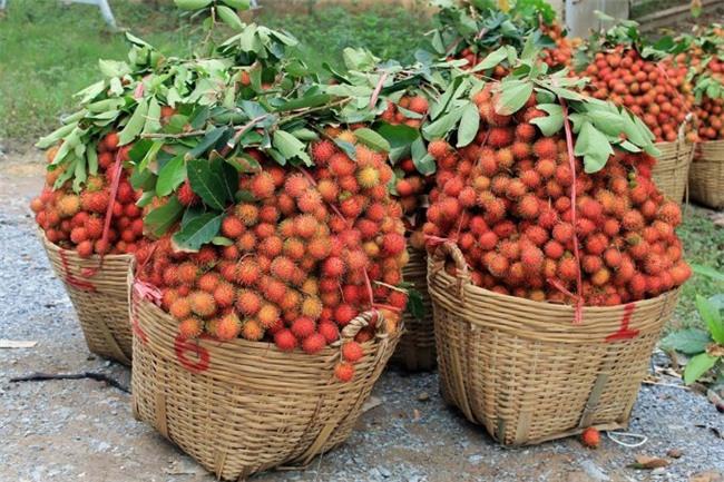 chôm chôm, giải cứu nông sản, nông sản giảm giá, nông sản việt nam,thương lái trung quốc dừng mua