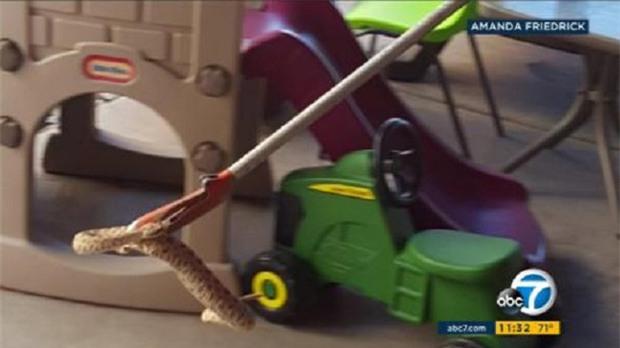 Thấy tiếng động lạ trong nhà đồ chơi của con, bà mẹ tá hỏa phát hiện cả ổ rắn độc - Ảnh 2.