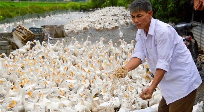 tỷ phú nông dân, nuôi vịt, trứng vịt