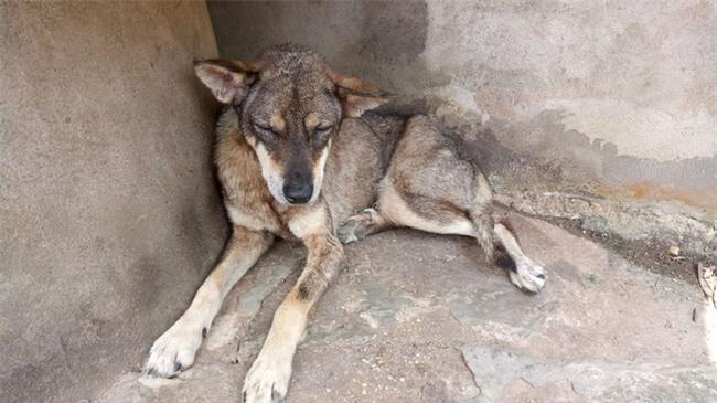 Xúc động chú chó không chịu ăn uống suốt gần 2 tháng từ ngày chủ mất - Ảnh 1.