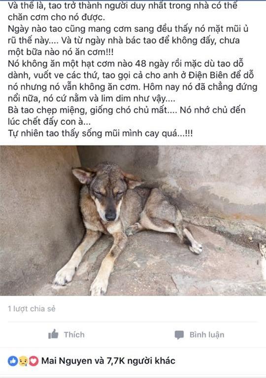 Xúc động chú chó không chịu ăn uống suốt gần 2 tháng từ ngày chủ mất - Ảnh 2.