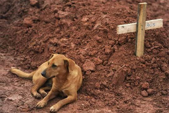 Xúc động chú chó không chịu ăn uống suốt gần 2 tháng từ ngày chủ mất - Ảnh 3.