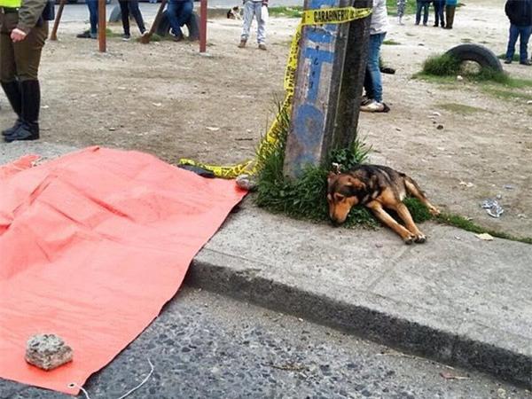 Xúc động chú chó không chịu ăn uống suốt gần 2 tháng từ ngày chủ mất - Ảnh 4.