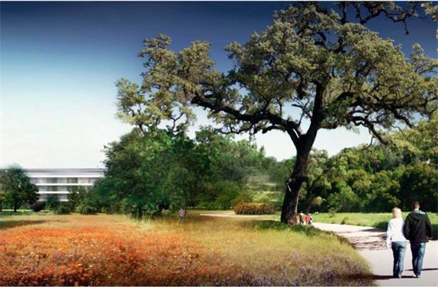 Bên cạnh khu làm việc, trụ sở của Apple còn sở hữu một khuôn viên rất rộng gồm cây cối, thảm cỏ và lối đi bộ.