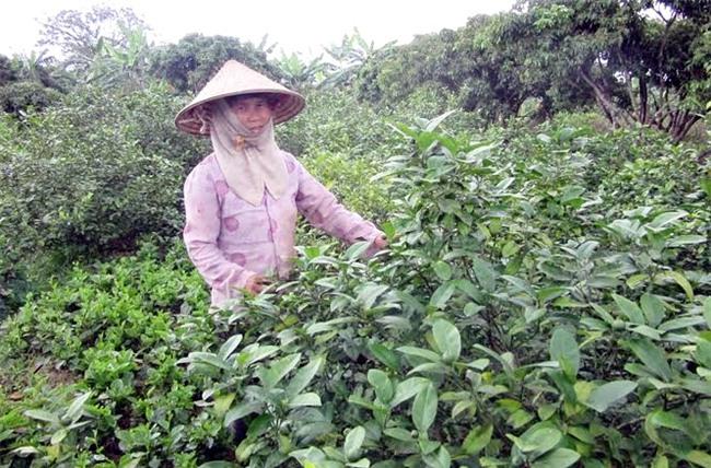 xuất khẩu nông sản, nông sản việt nam, nông sản sạch