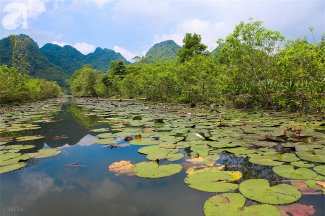 Không cần đi đâu xa, tới chùa Hương ngắm hoa súng đầu mùa đẹp như trong tranh - Ảnh 1.