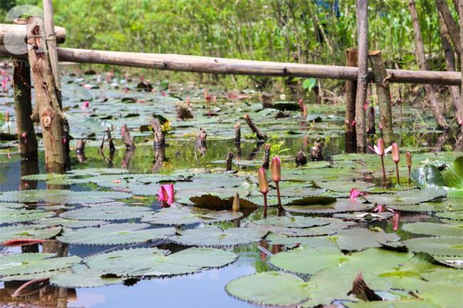 Không cần đi đâu xa, tới chùa Hương ngắm hoa súng đầu mùa đẹp như trong tranh - Ảnh 14.
