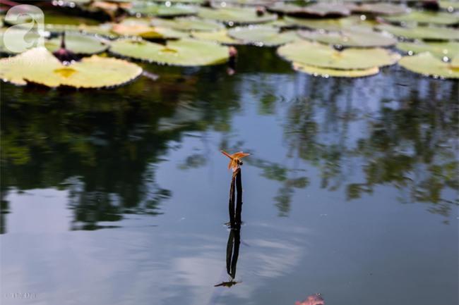 Không cần đi đâu xa, tới chùa Hương ngắm hoa súng đầu mùa đẹp như trong tranh - Ảnh 8.