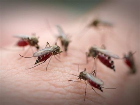 Lý do tại sao một số người lại thường bị muỗi cắn nhiều hơn người khác