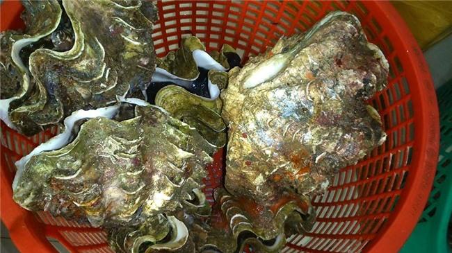 ốc tai tượng, hải sản biển, đặc sản nhà giàu