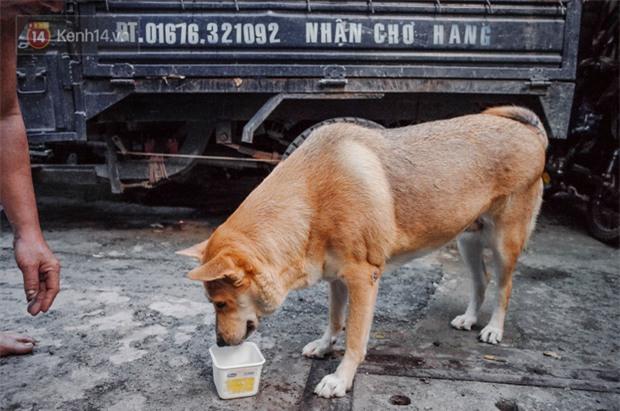 Gặp Gấu - chú chó cá tính nhất Sài Gòn: Chủ mua gì cũng xung phong xách hộ, không cho theo thì hờn mát bỏ ăn! - Ảnh 10.