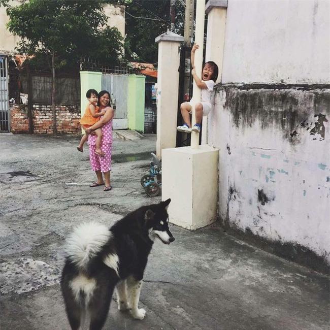 Cô bé la khóc, trèo lên cột vì sợ chó: Khoảnh khắc gây bão mạng xã hội Việt - Ảnh 1.