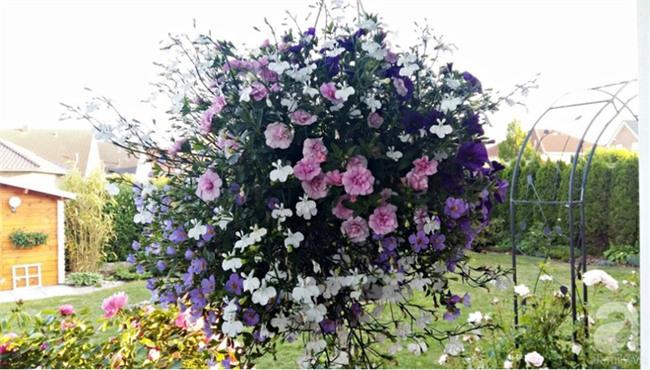 Người phụ nữ gốc Hà Nội dành 14 năm để biến đất trống thành khu vườn như ở xứ sở thần tiên - Ảnh 9.