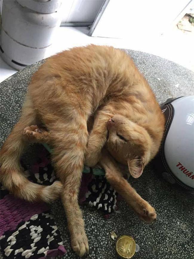 Câu chuyện về chú mèo 20 tuổi ở Long An khiến bao người cảm động - Ảnh 3.