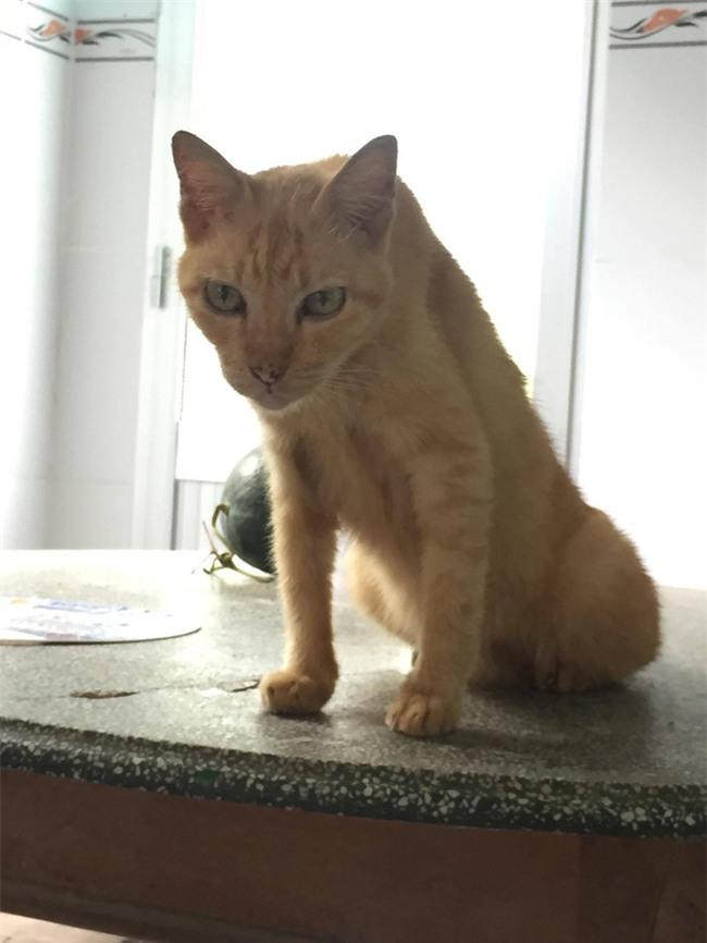 Câu chuyện về chú mèo 20 tuổi ở Long An khiến bao người cảm động - Ảnh 5.