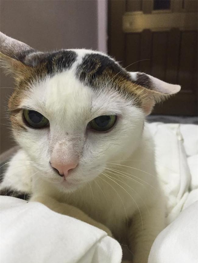 Câu chuyện về chú mèo 20 tuổi ở Long An khiến bao người cảm động - Ảnh 6.