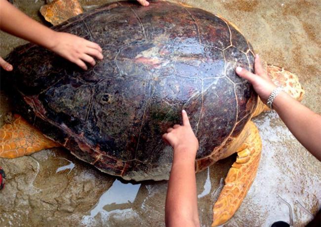 rùa vàng, rùa quý, bắt được rùa vàng