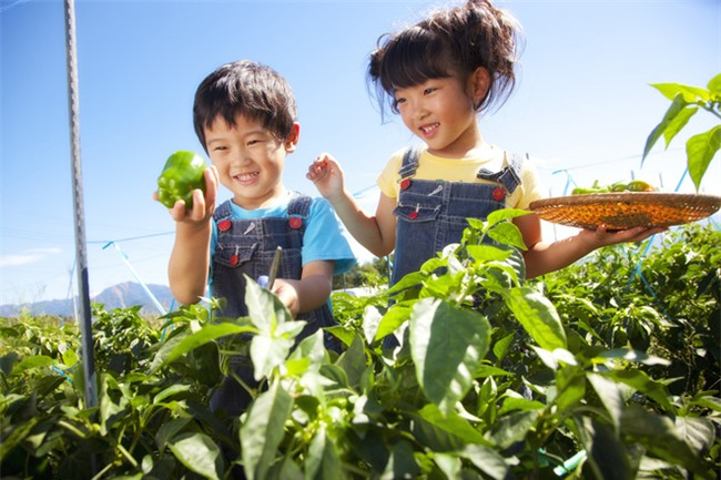 Hóa ra cha mẹ Nhật mang cả âm dương ngũ hành để dạy con. Thảo nào trẻ lại thông minh đến vậy - Ảnh 2.