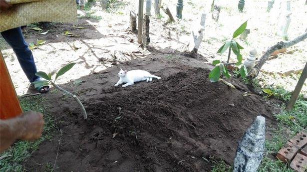 Video: Xót xa nhìn chú mèo bất lực bới mộ ông chủ vừa được chôn cất-1