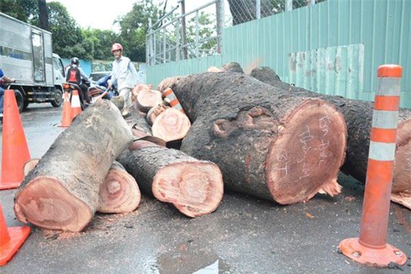 cây xanh, cây ngã đè ô tô, cây cổ thụ bất gốc, Sài Gòn