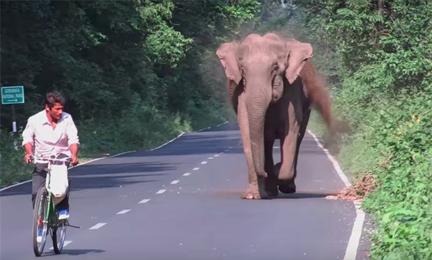 Ai cũng nín thở nhìn con voi hung hăng đuổi theo người đàn ông nhưng bỗng dưng nó dừng lại, quay đầu làm một việc - Ảnh 2.