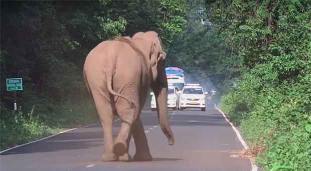 Ai cũng nín thở nhìn con voi hung hăng đuổi theo người đàn ông nhưng bỗng dưng nó dừng lại, quay đầu làm một việc - Ảnh 3.