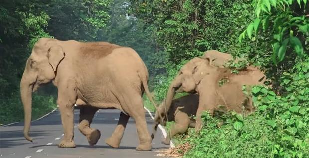 Ai cũng nín thở nhìn con voi hung hăng đuổi theo người đàn ông nhưng bỗng dưng nó dừng lại, quay đầu làm một việc - Ảnh 4.