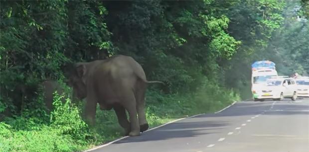 Ai cũng nín thở nhìn con voi hung hăng đuổi theo người đàn ông nhưng bỗng dưng nó dừng lại, quay đầu làm một việc - Ảnh 5.