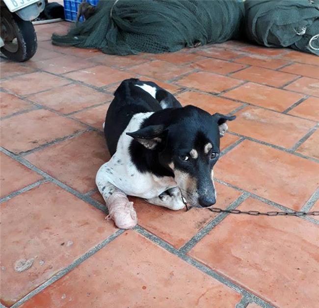 Chặt chân chó, Người phụ nữ chặt chân chó, Phú Quốc
