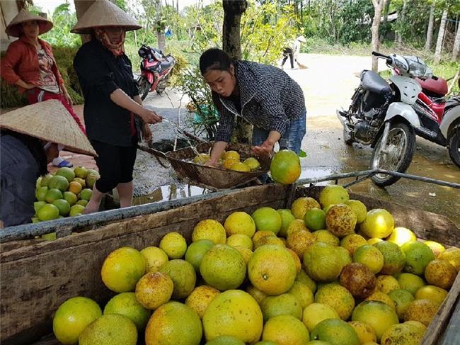 hoa quả nhập khẩu, táo Tàu, hoa quả Trung Quốc, thủy quái, dưa hấu Nhật, rùa vàng, sâm Ngọc Linh