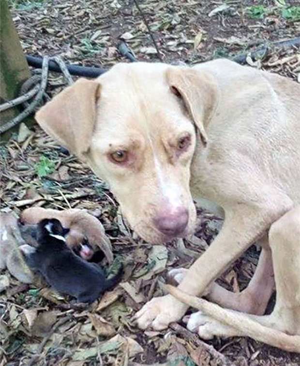 Bị trói vào cây, bỏ đói suýt chết, chú chó vẫn không quên bảo vệ thứ quý giá này - Ảnh 2.