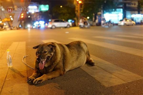 Chú chó gây sốt mạng xã hội Việt vì thân hình siêu béo  - Ảnh 5.