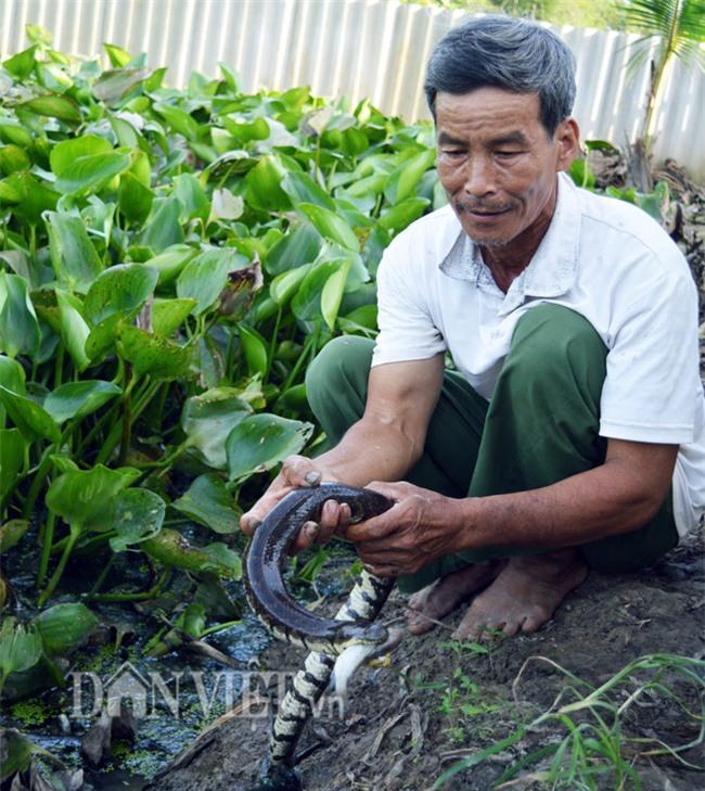 nuôi rắn,mãng xà